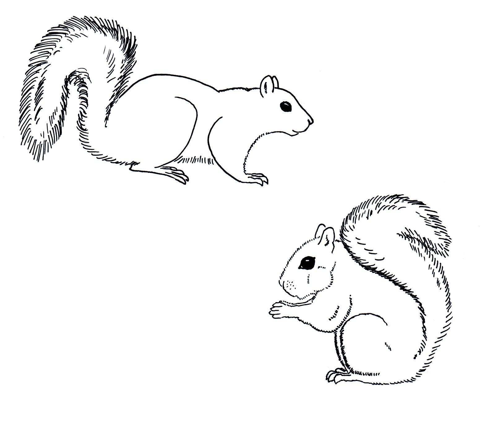 Squirrel Coloring Pictures